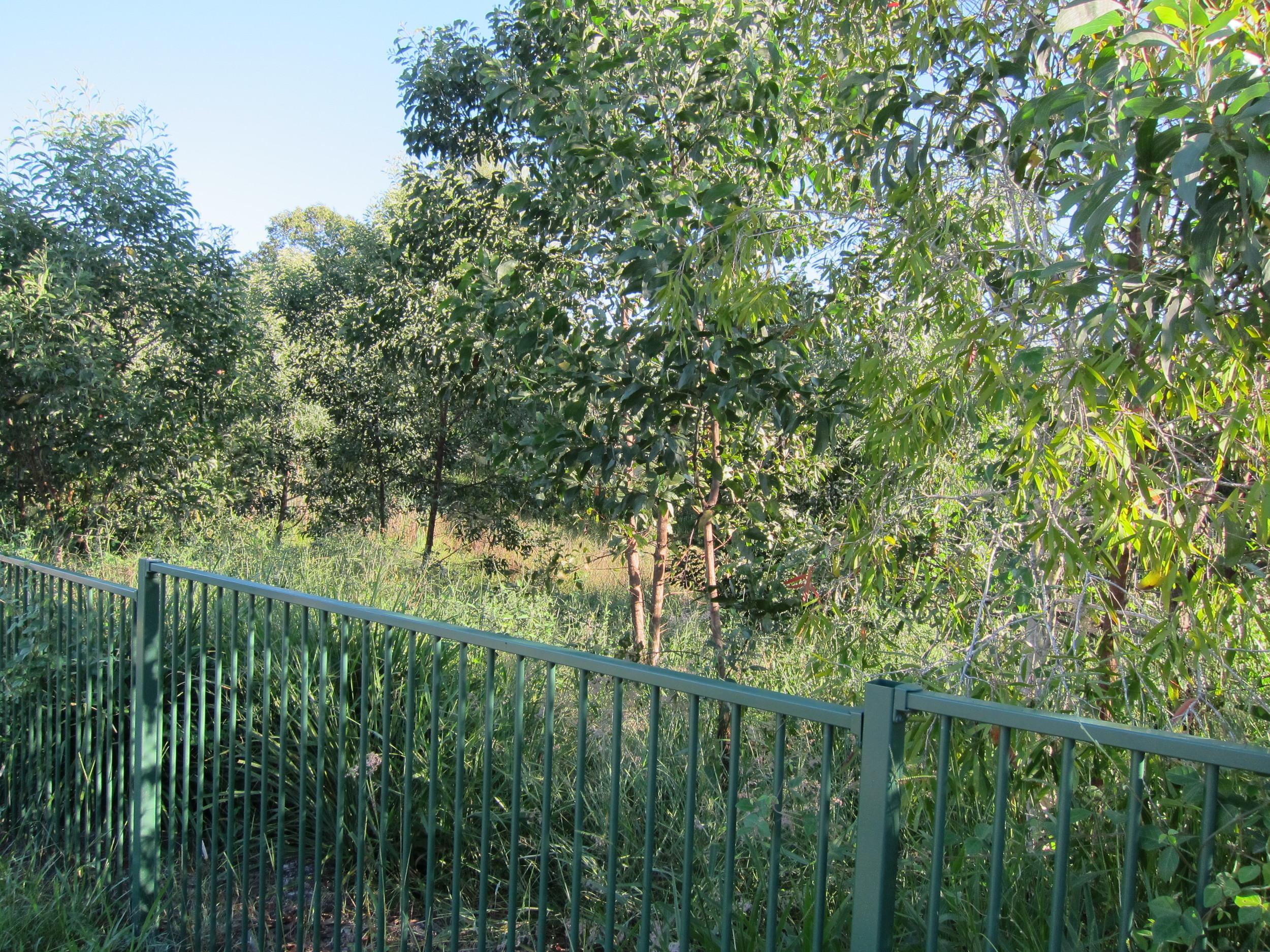 Devereaux Road Bioretention System
