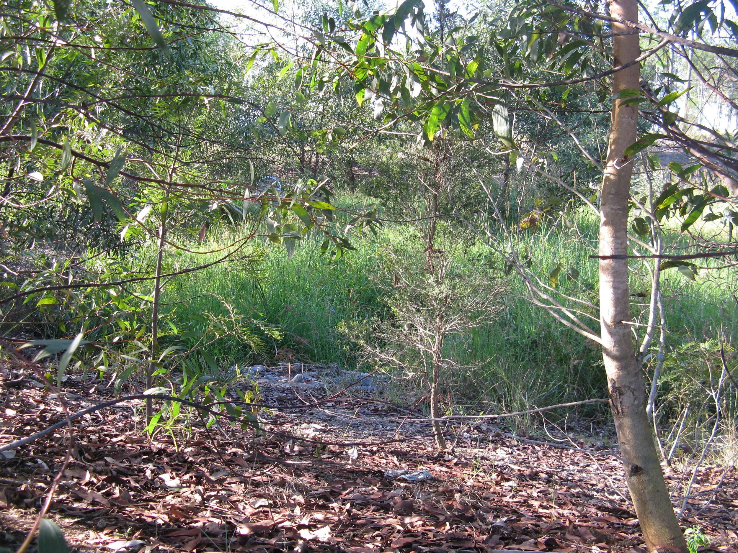 Central Park Drive Bioretention System