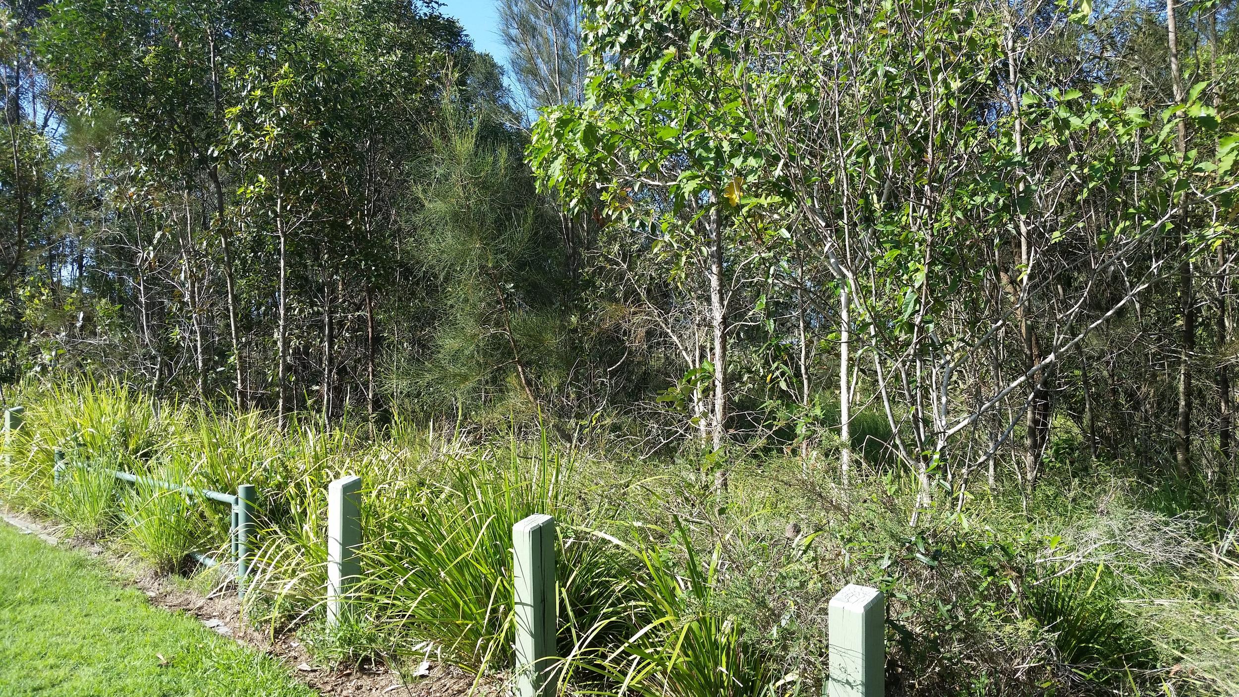 Alvine Drive Bioretention System
