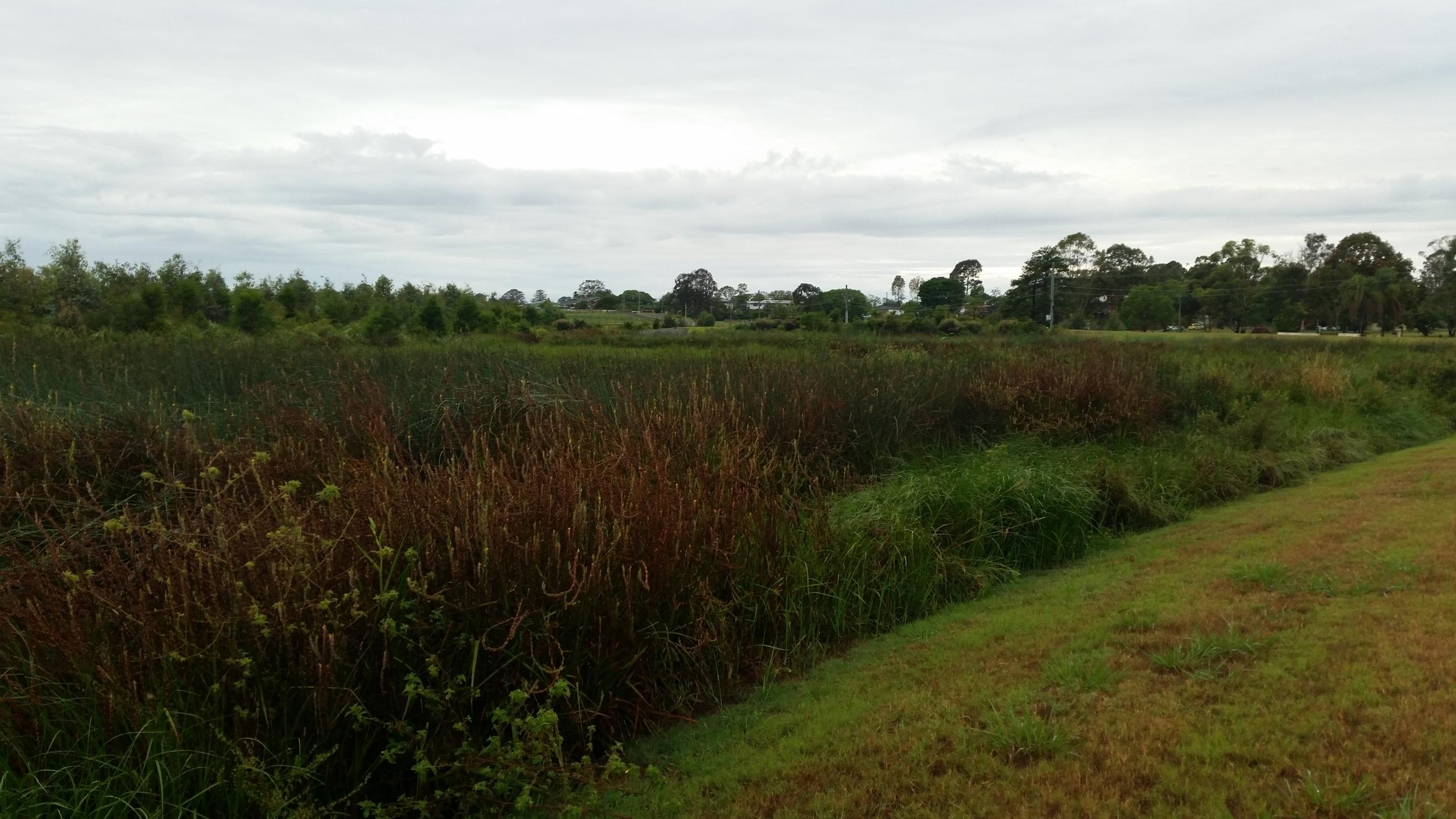 Loganlea Road Wetland