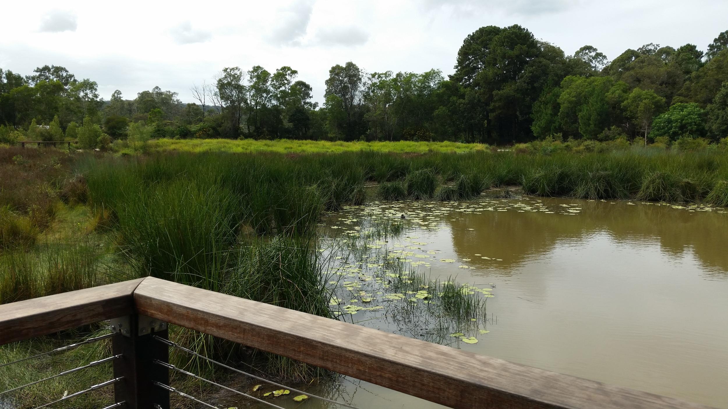 Shailer Pioneer Park Wetland