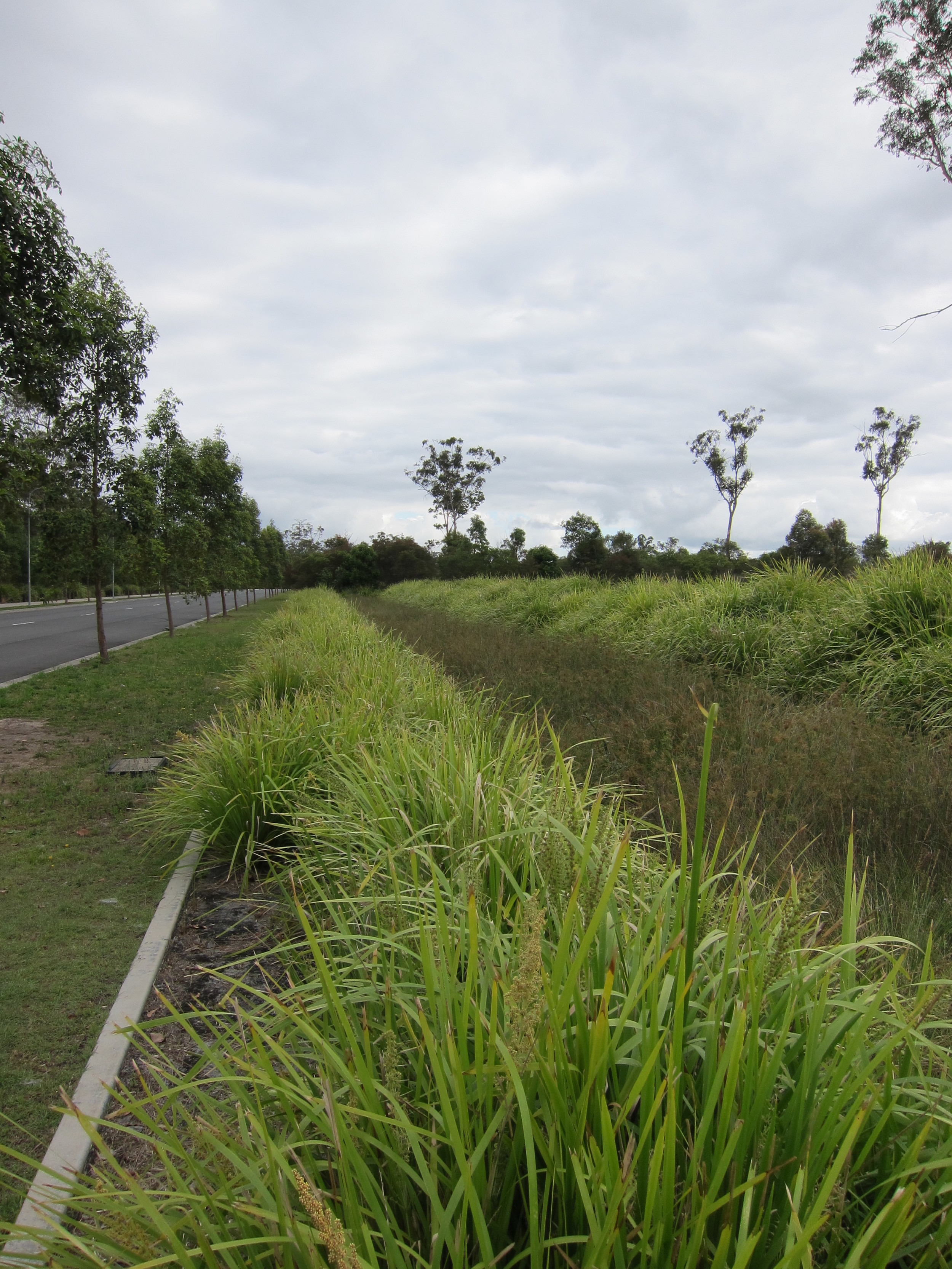 South West 1 Bioretention System