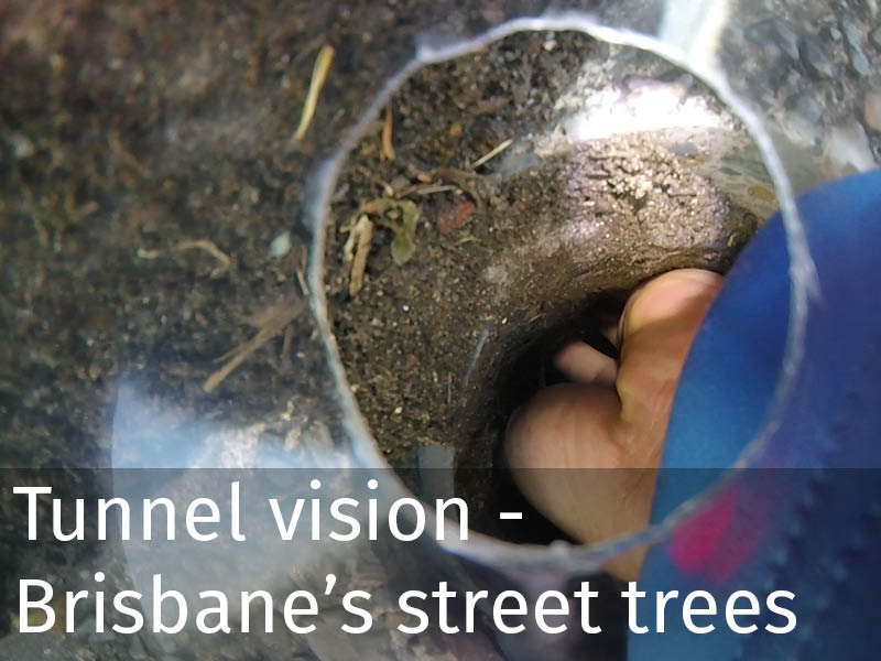20150102 0091 Tunnel vision - Brisbane's street trees.jpg