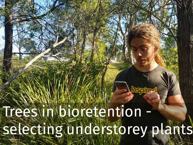 20150102 0107 Trees in bioretention - selecting understorey plants.jpg
