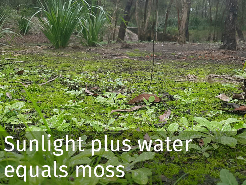 20150102 0251 Sunlight plus water equals moss.jpg