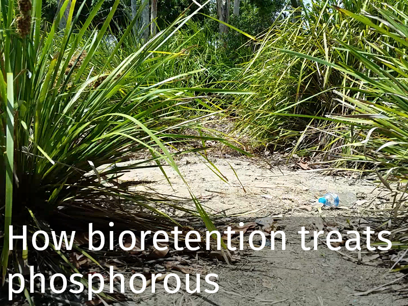 20150102 0013 Bioretention treats phosphorous.jpg
