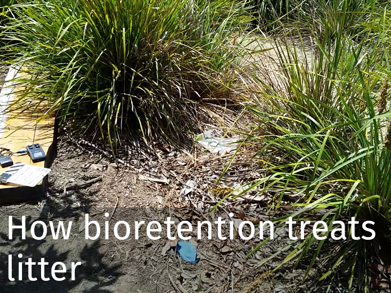 20150102 0014 Bioretention treats litter.jpg