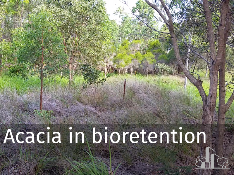 20150102 0028 Acacia in bioretention.jpg