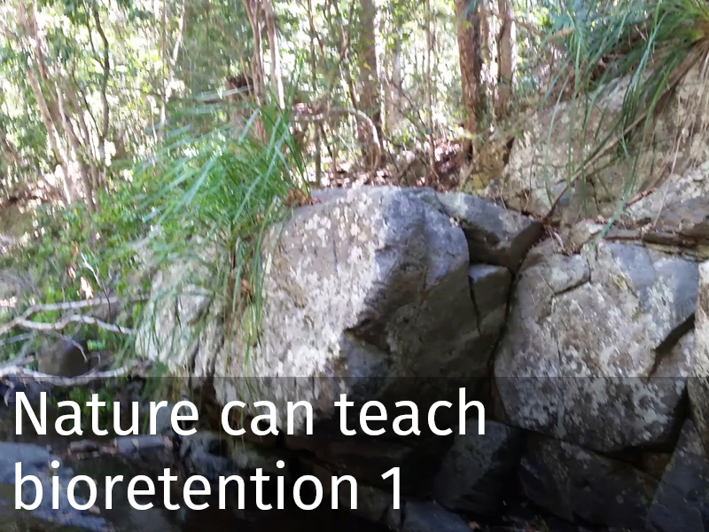 20150102 0039 Nature can teach bioretention 1.jpg