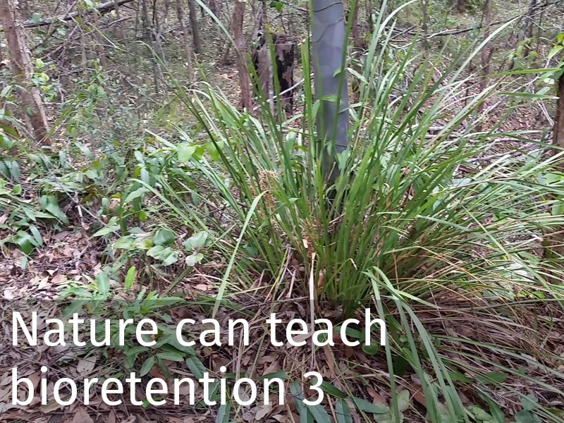 20150102 0041 Nature can teach bioretention 3.jpg