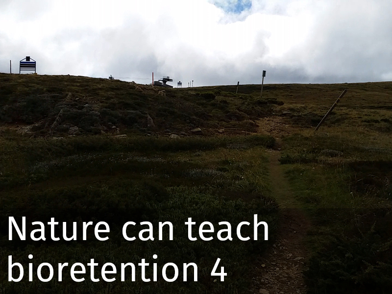 20150102 0042 Nature can teach bioretention 4.jpg
