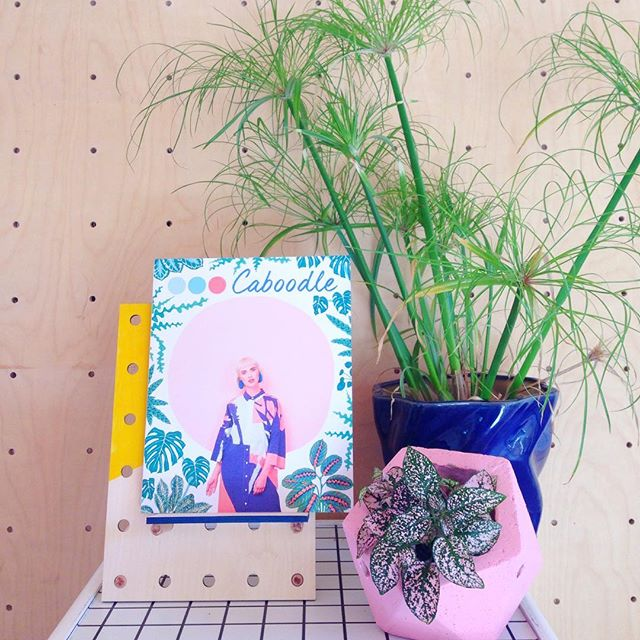 🌿 Loving the response to the new issue so far!! PROUD AF!!! 🌿 You can grab a copy in the @caboodlemagazine web shop now!! #caboodlemagazine #selfpublished #makersgonnamake #makersmovement #craftsposure #creativityfound #paperlove #printisnotdead #supportsmallbusiness #indiemags #indiemagazine #independentmagazine #abmplantlady #crazyplantlady