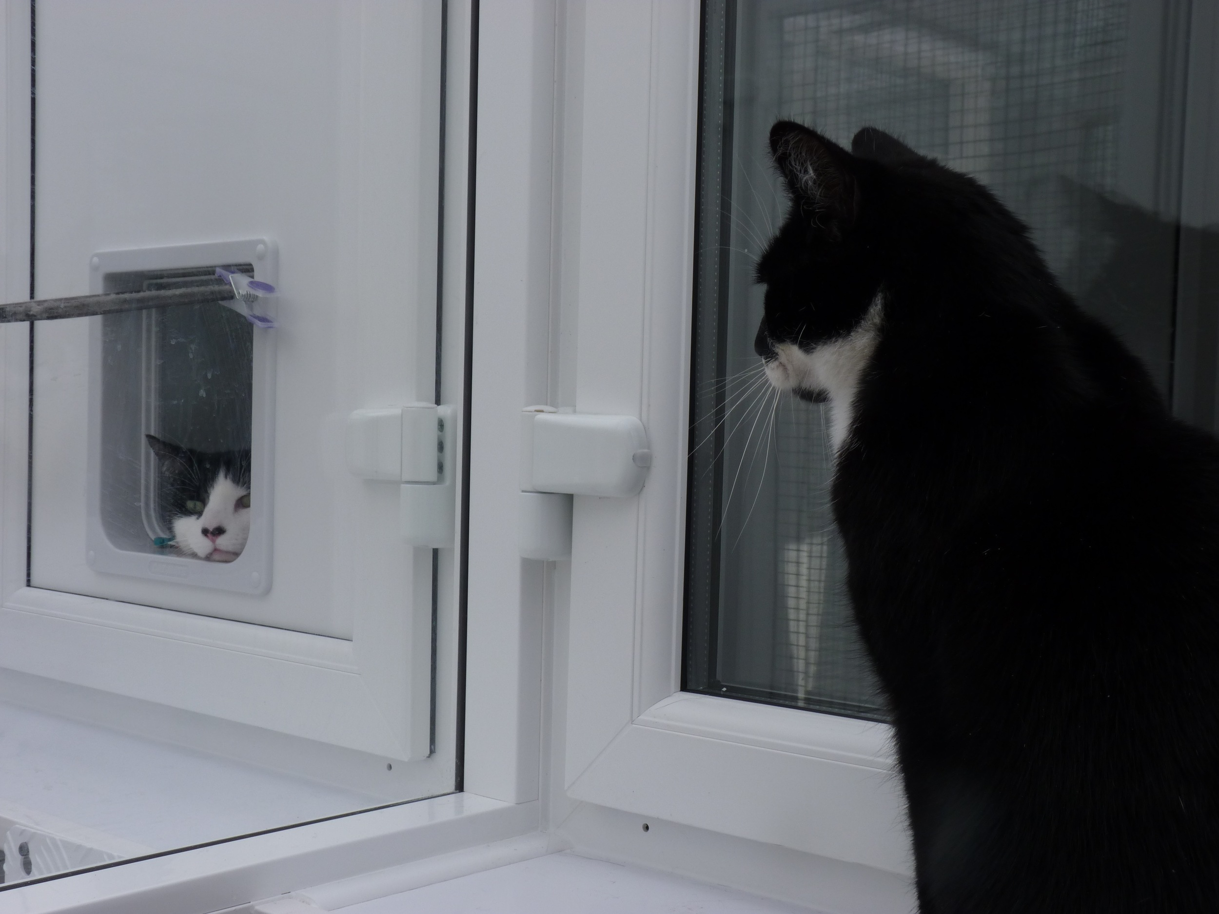 Purrfect Stay Cattery, the view from the sleeping area of a pen