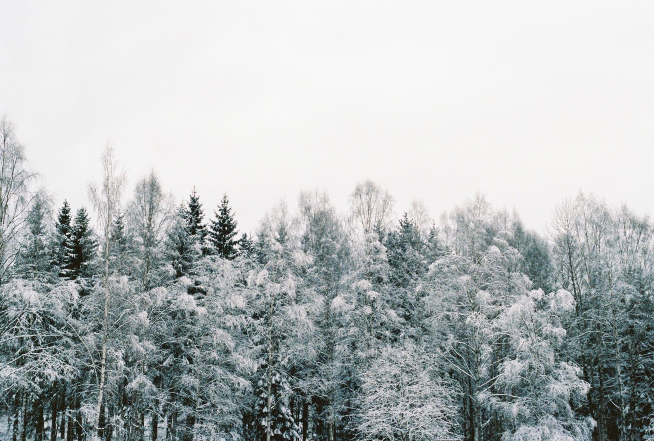 Vinterhagen08.jpg