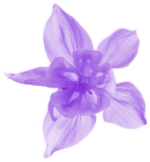 cradle-to-grave-small-purple-flower.png