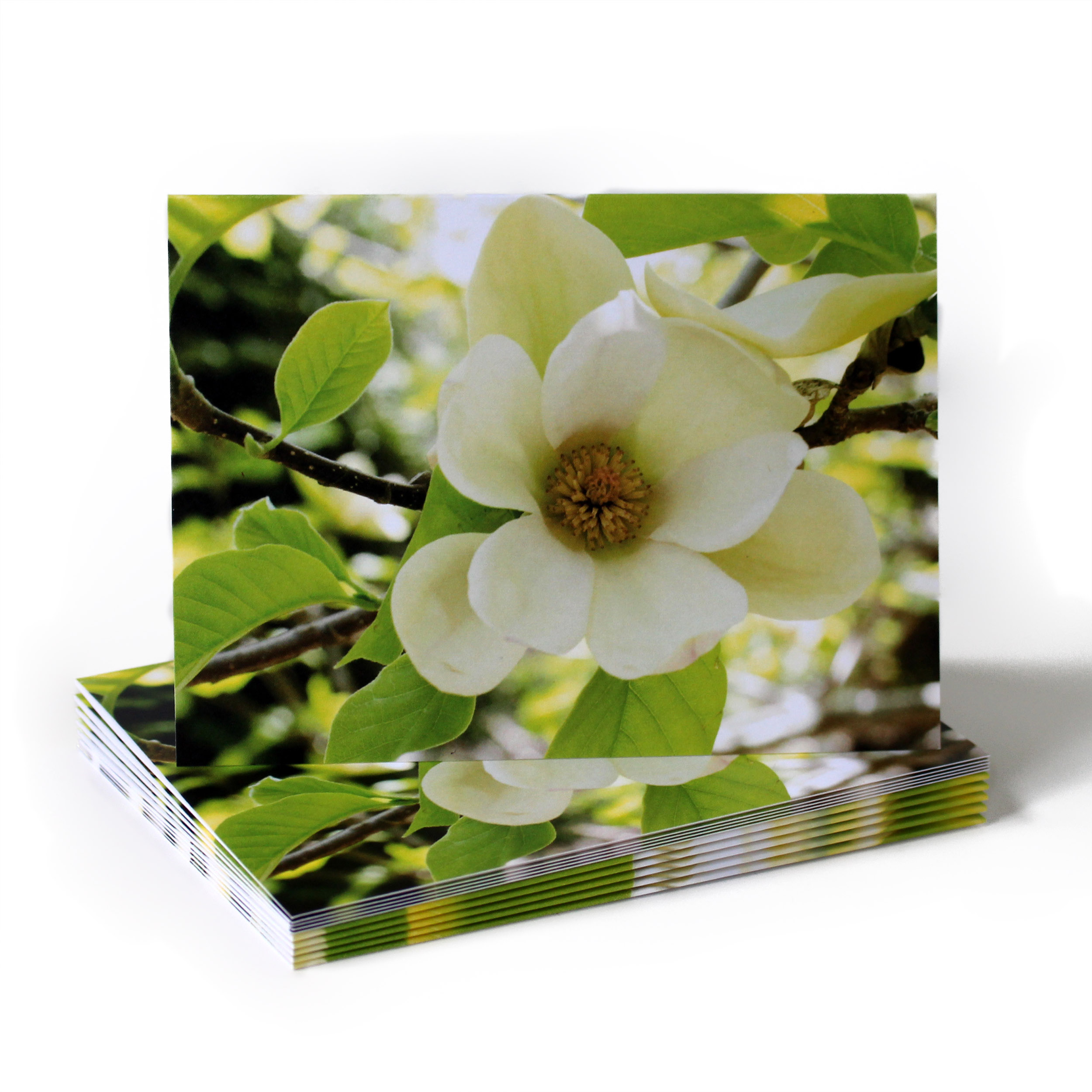 Cafe Notes + Company Magnolia Card