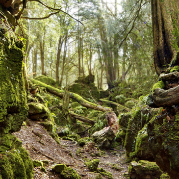puzzlewood.roots.jpg