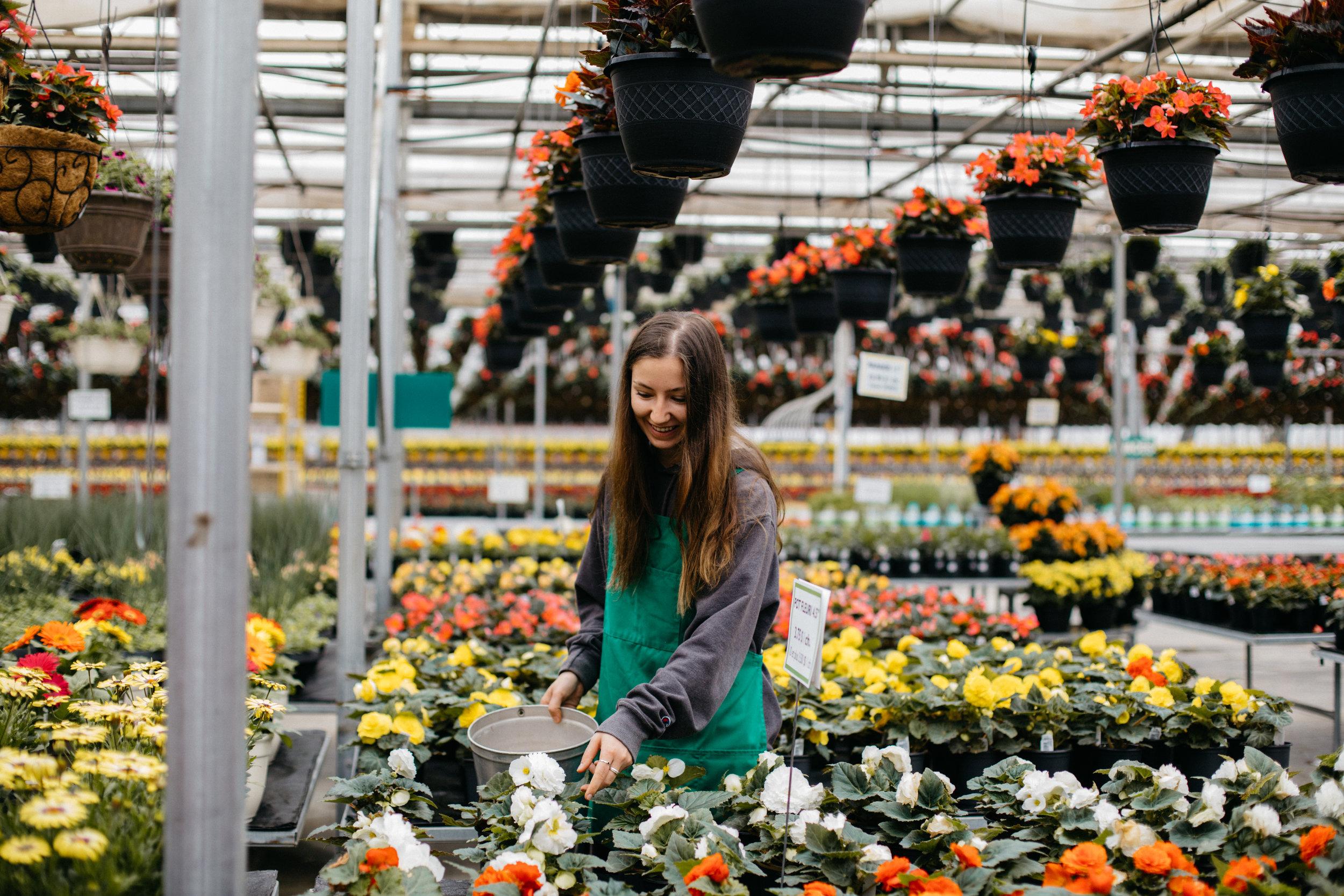 Venez voir par vous-même… - Des fleurs à perte de vue, au prix du producteur!