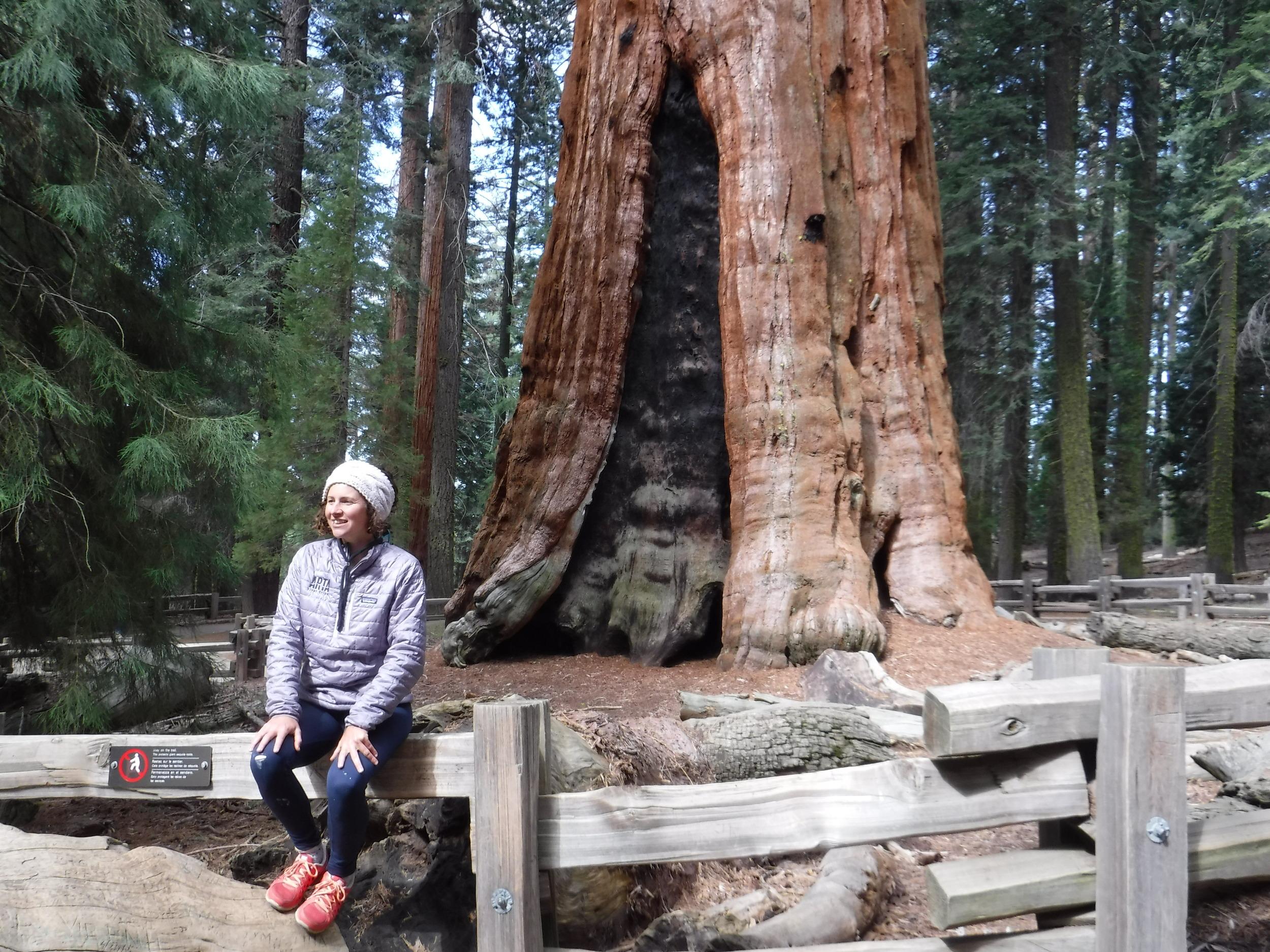 Sequoias!