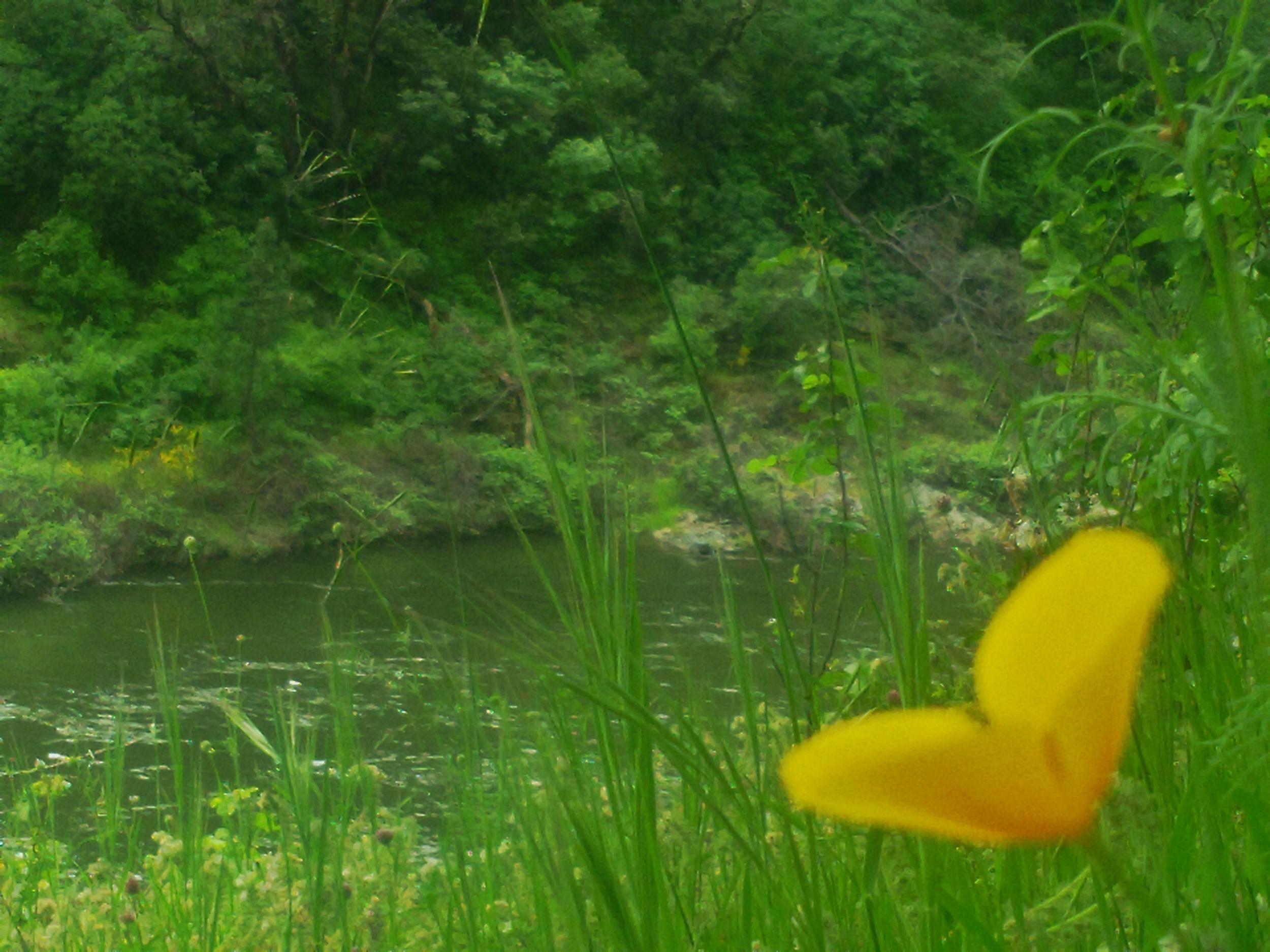 South Fork in Spring