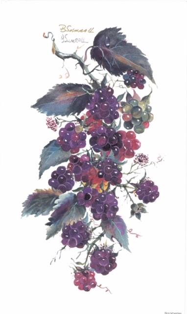 Grapes (s) By Sumrall 20.5cm (w) x 34 (h) Image 20.5cm (w) x 34 (h)  Paper.jpg