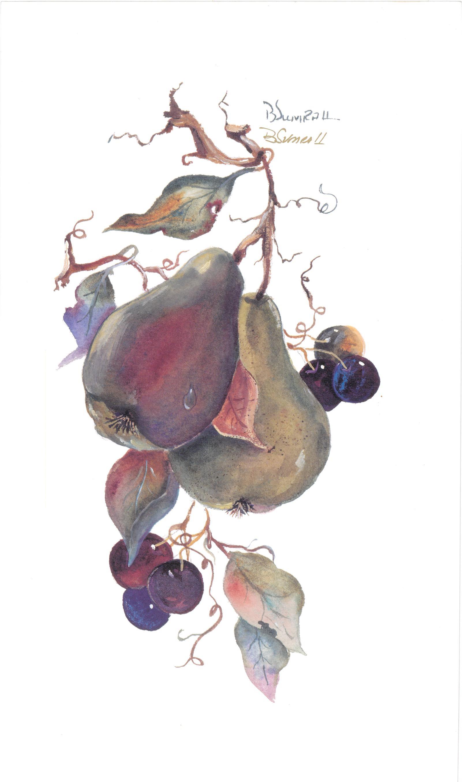 Pears (S) By Sumrall 20.5cm (w) x 34 (h)  Image 20.5cm (w) x 34 (h) Paper.jpg