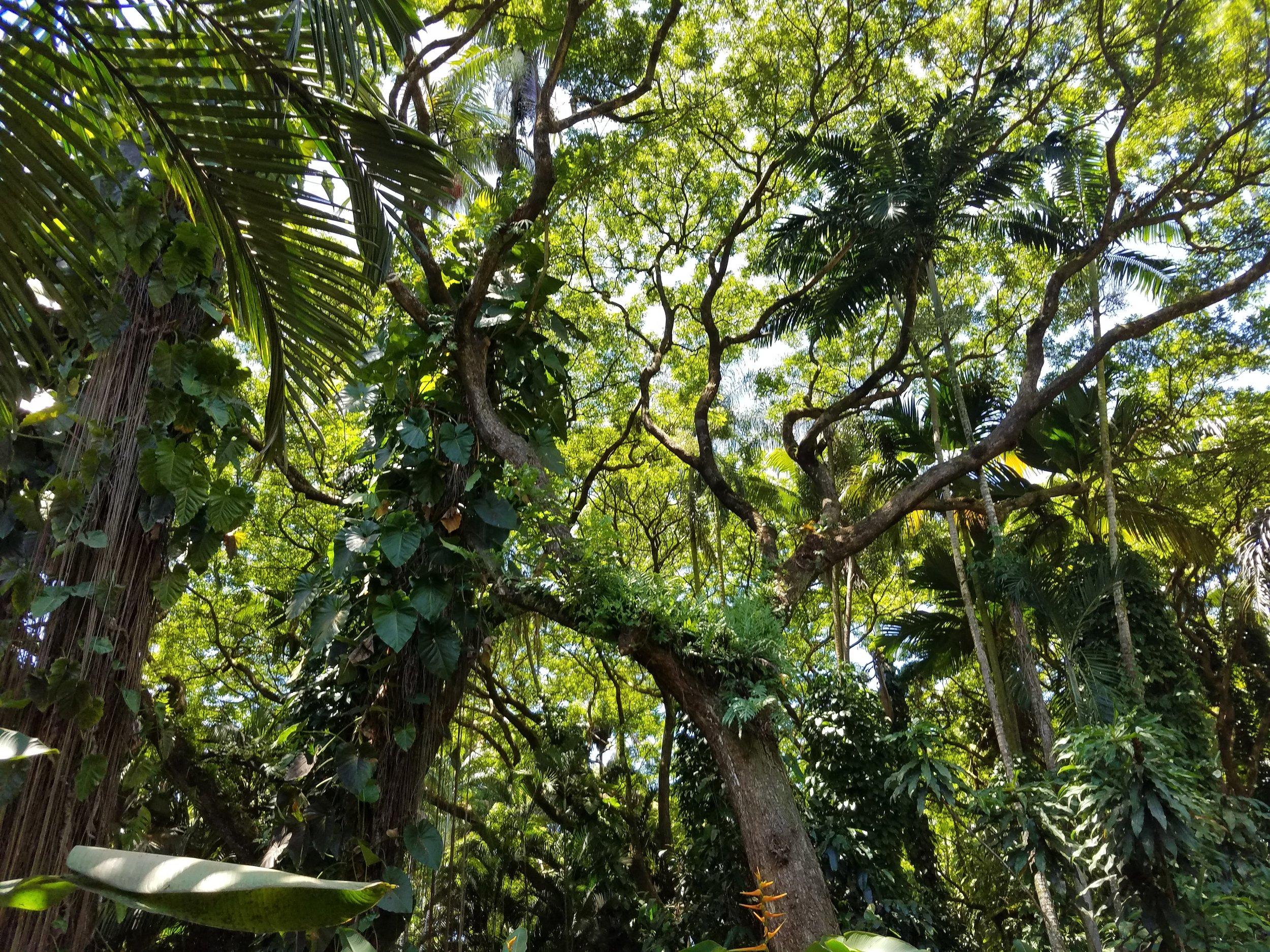 Hawaii Tropical Botanical Garden -