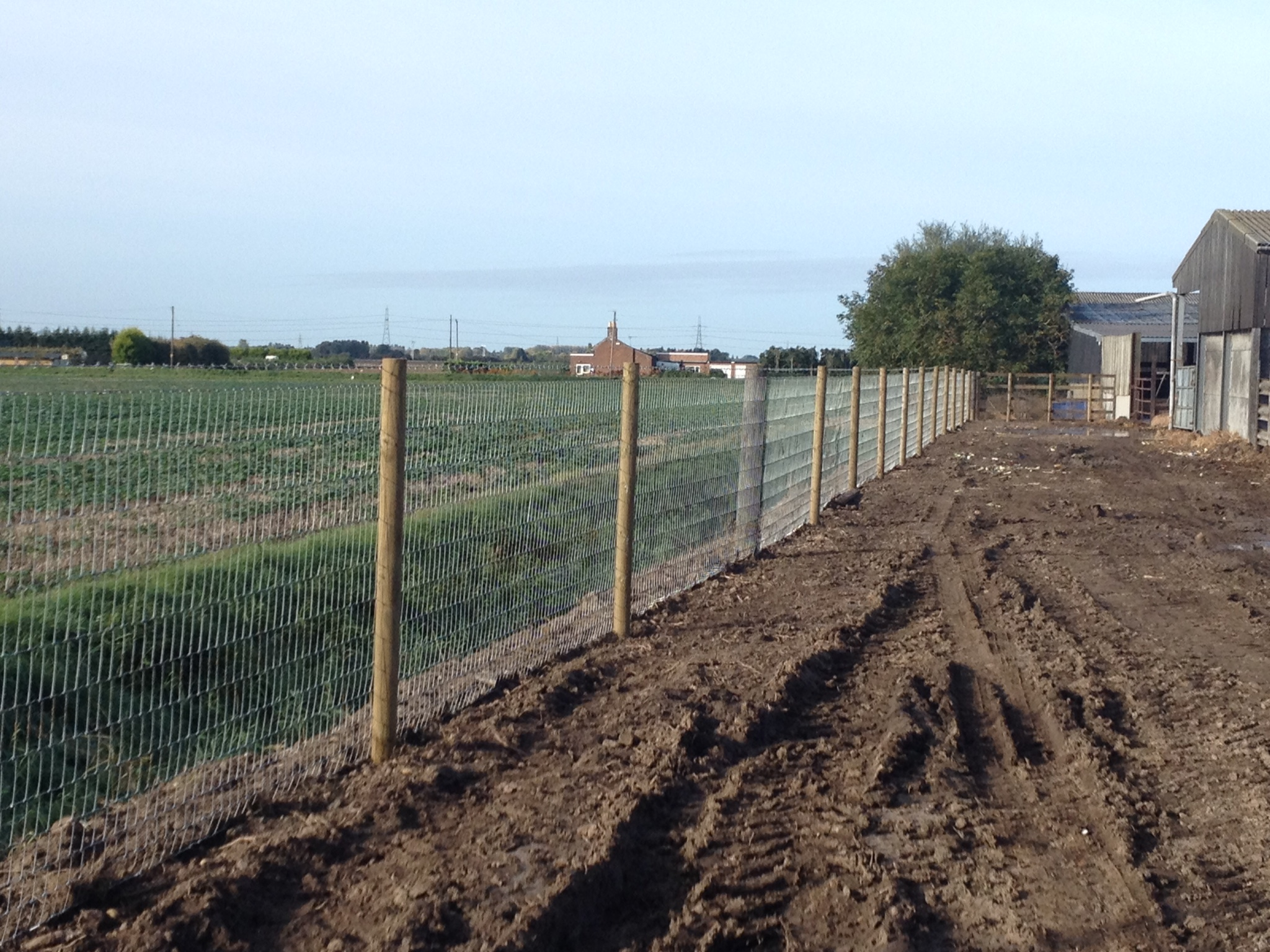 Badger and deer fencing at cattle finishing unit near Wisbech