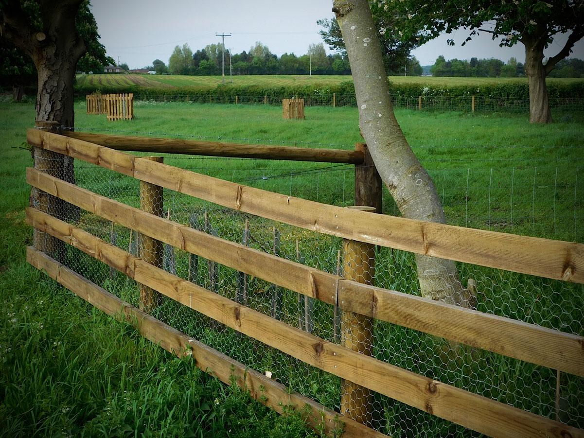 paddock-and-tree-guards2.jpg