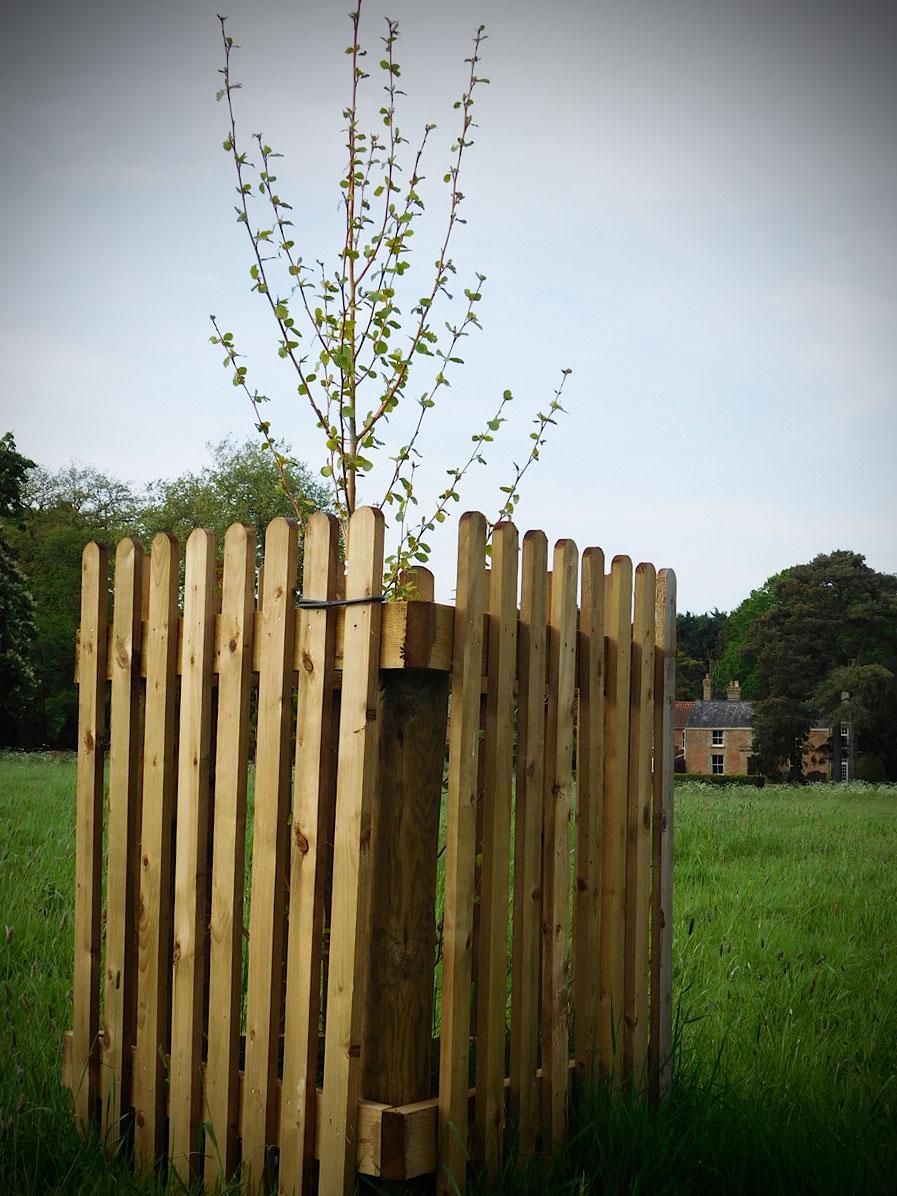 paddock-and-tree-guards3.jpg
