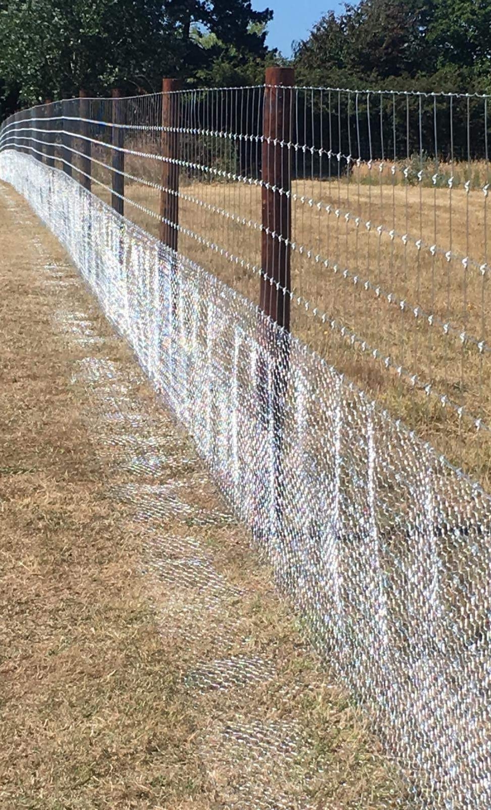 The rabbit netting is turned out to add further protection against burrowing rabbits