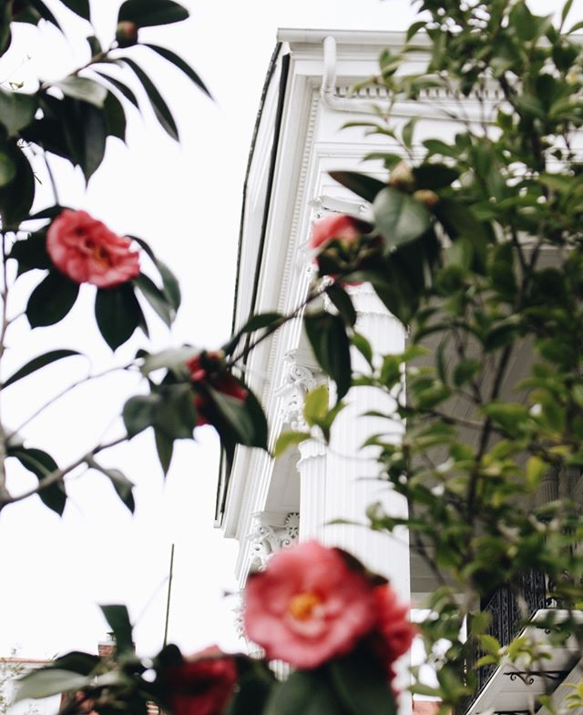 Friday Friday Friday 🌺  #charleston #explorecharleston #abitofcharleston #chs #chstoday #southernliving #slpicks #travelandleisure #cntraveler #tlpicks #historiccharleston #southofbroad #charlestonarchitecture
