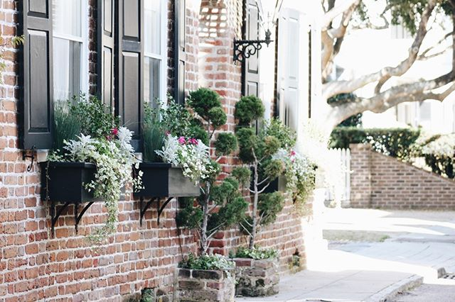 Monday motivation —  Can't wait for more weekend exploring 🌳🌸 #abitofcharleston #charleston #explorecharleston #historiccharleston #chs #downtowncharleston #visitcharleston #discoversc #southofbroad #southbattery #customtravelguides #traveldeeper #charlestonarchitecture #travel #southernliving #slpicks #slhomes #cntraveler #travelandleisure #condenasttraveler #southcarolina #windowboxesofcharleston #windowboxwednesday #windowbox