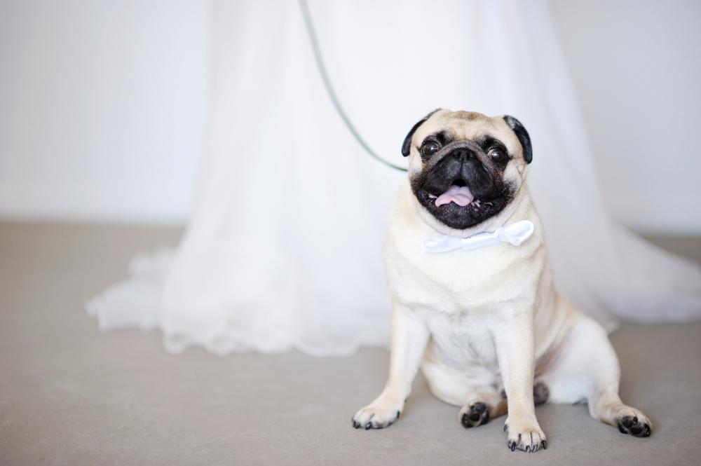wedding-dog.jpg