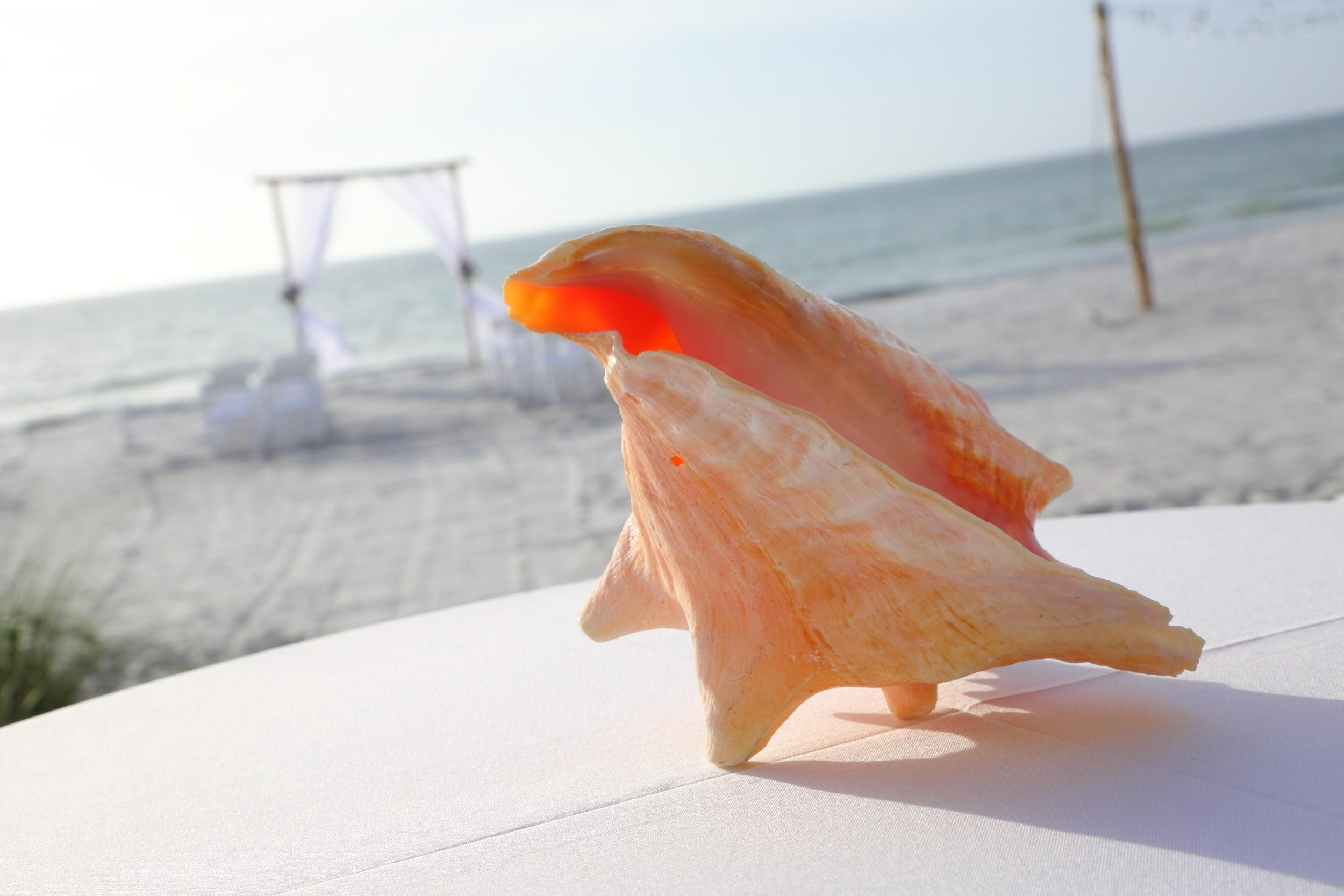 A peach seashell on the welcome table