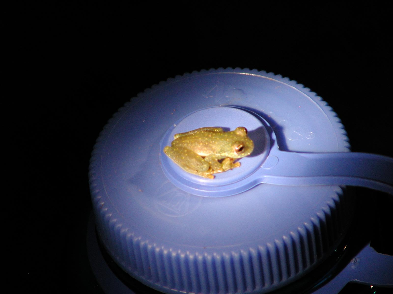Frog- nalgene bottle.JPG