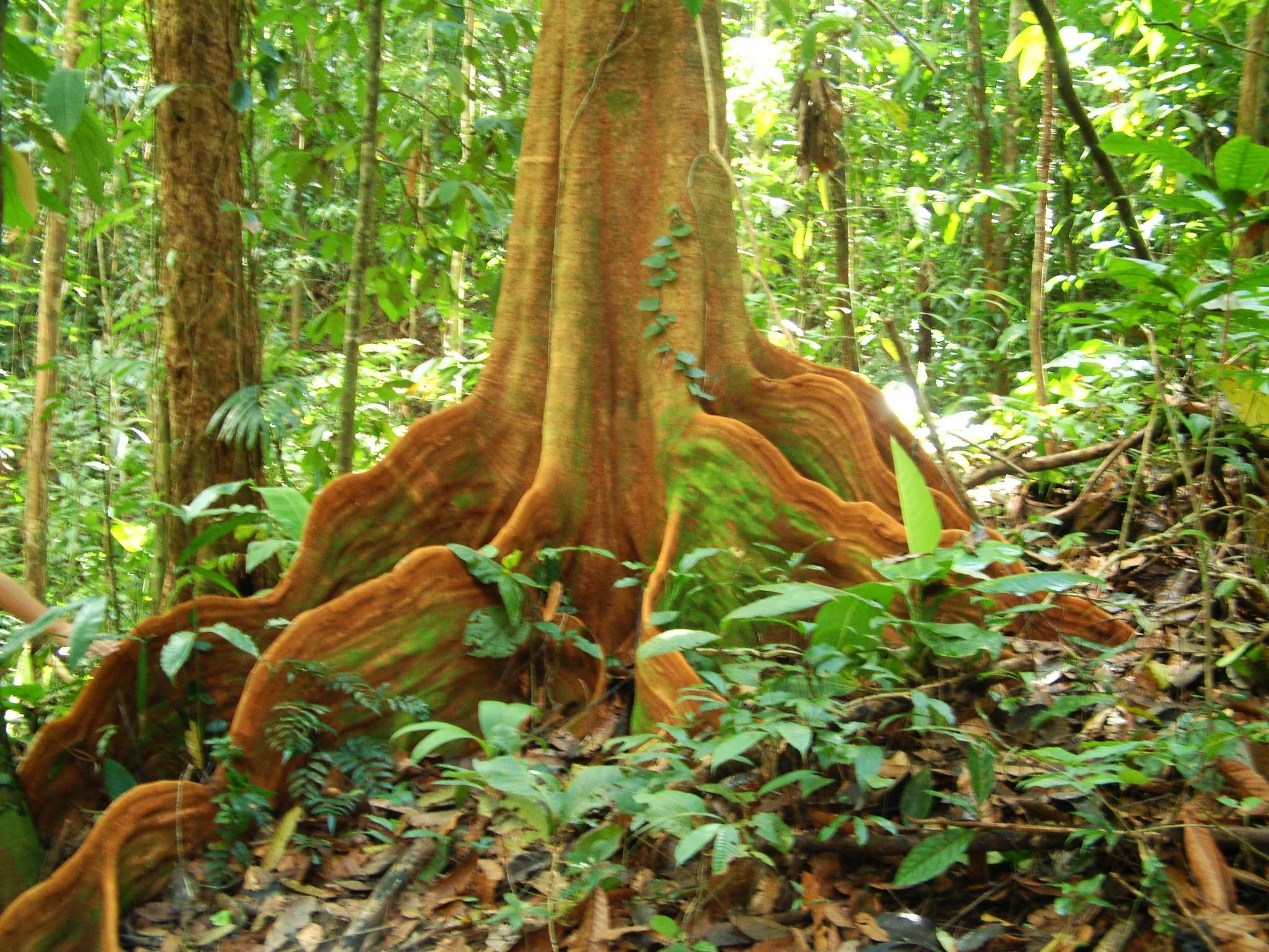 Orange Tree 3.jpg