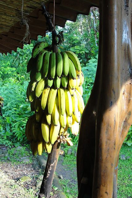 Endless Bananas.jpg