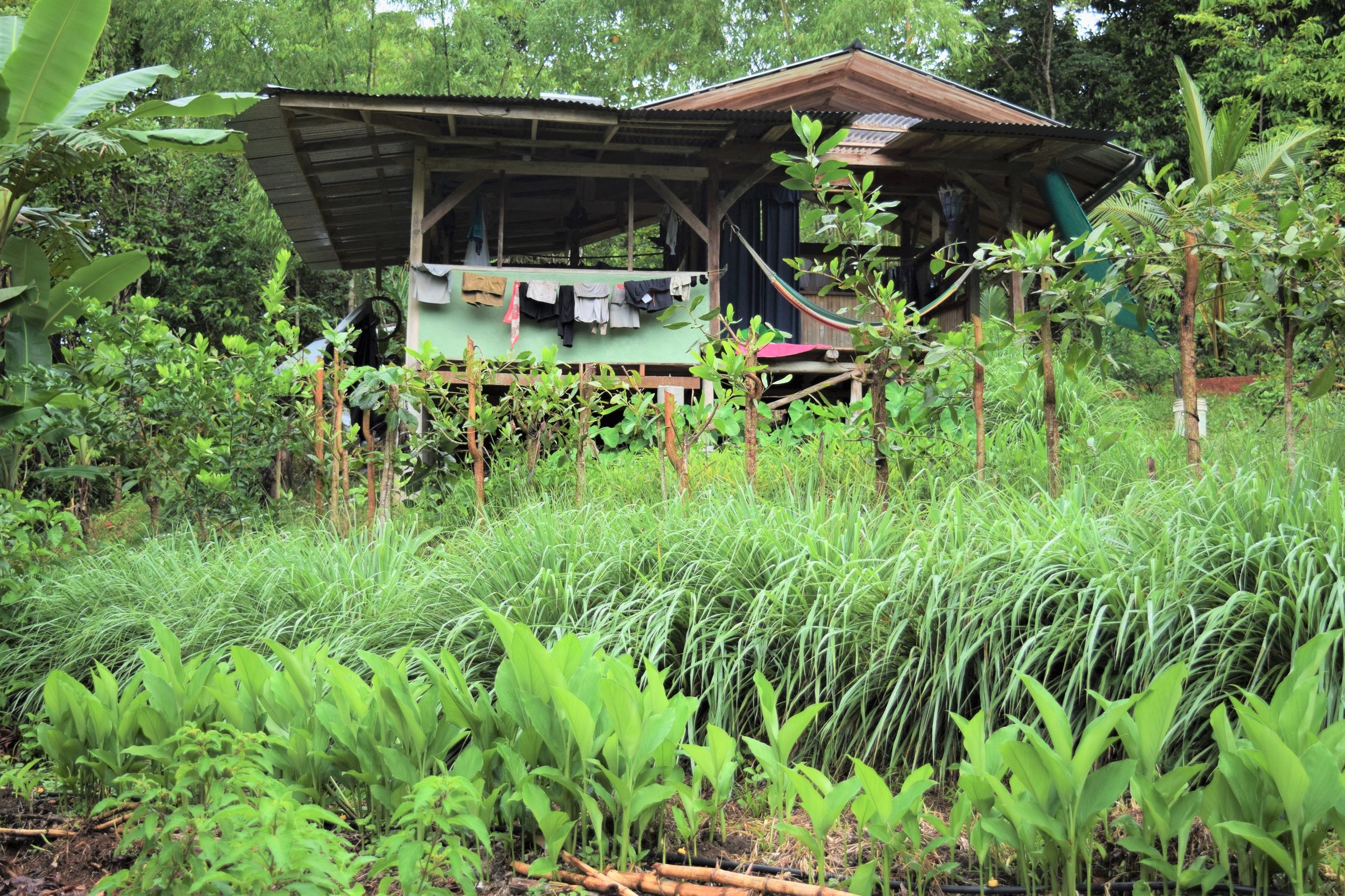 Our house at Rancho Mastatal. My partner Scott Gallant and I designed the yard to grow food, medicine, and market crops. (Photo Credit Laura Killingbeck; Mastatal, Costa Rica)