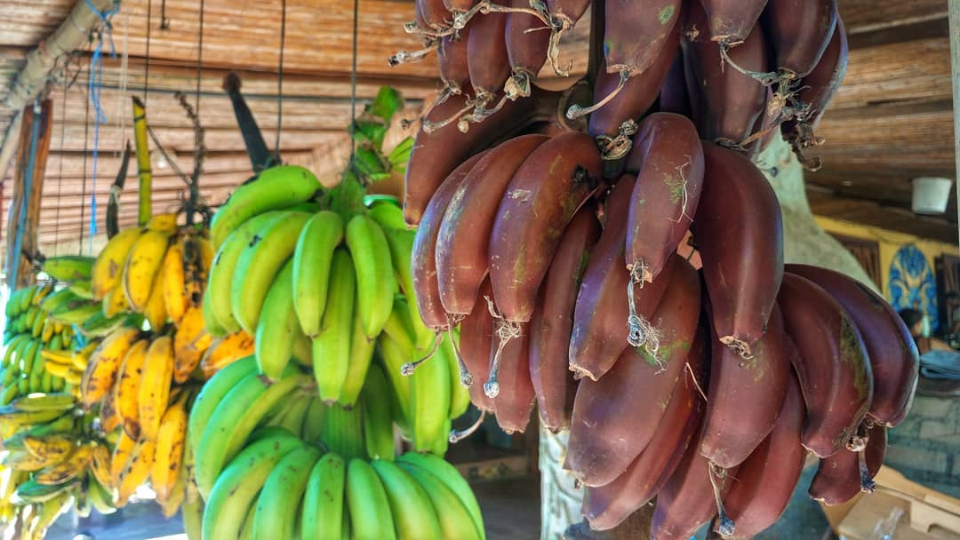 Some local banana varieties