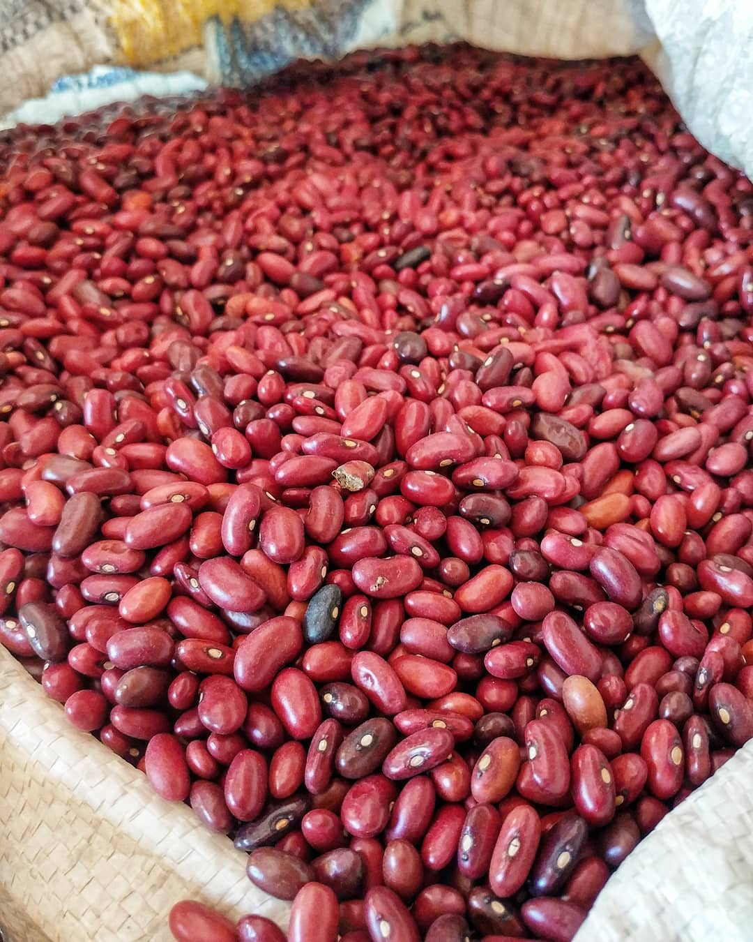 Local red beans