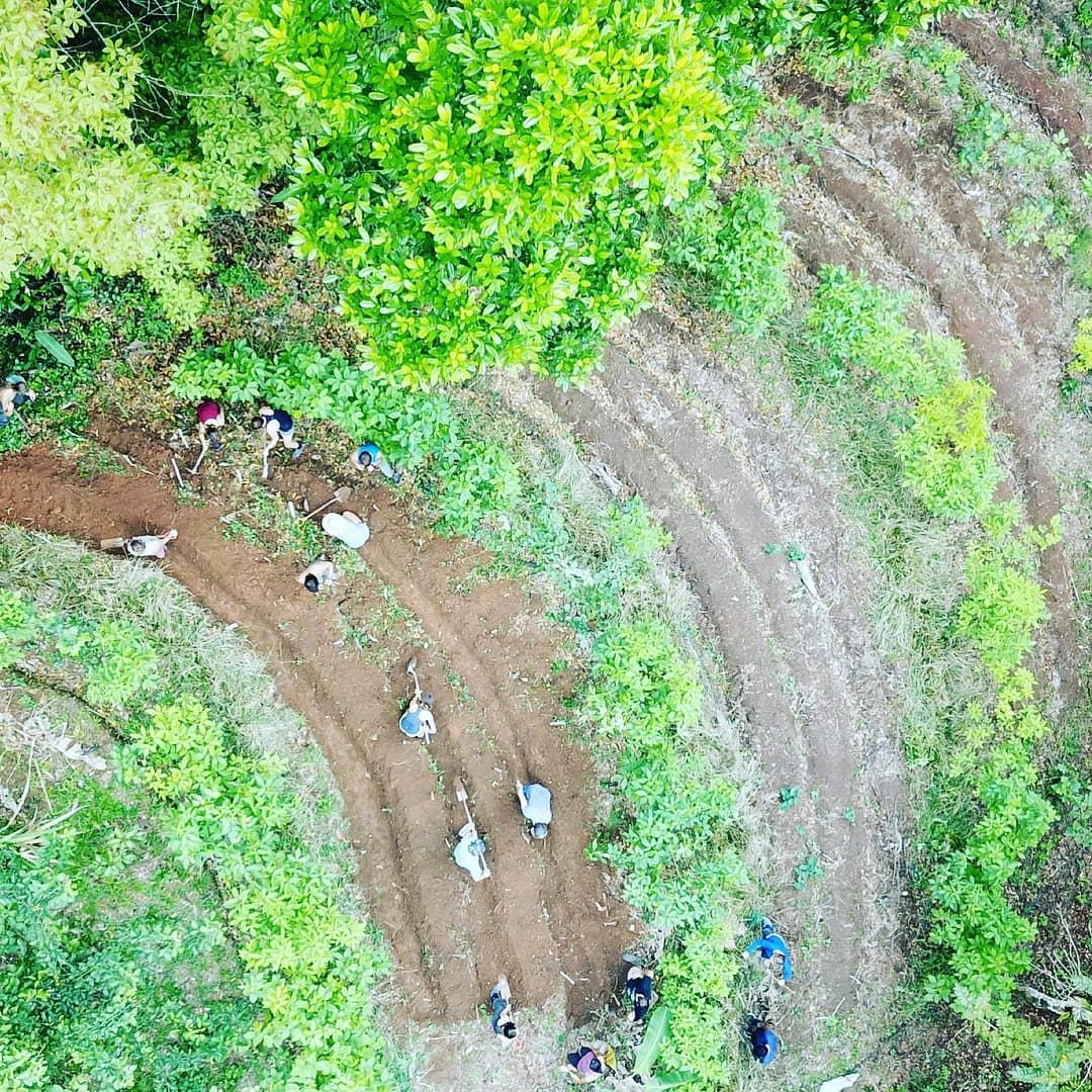 Agroforestry2.jpg