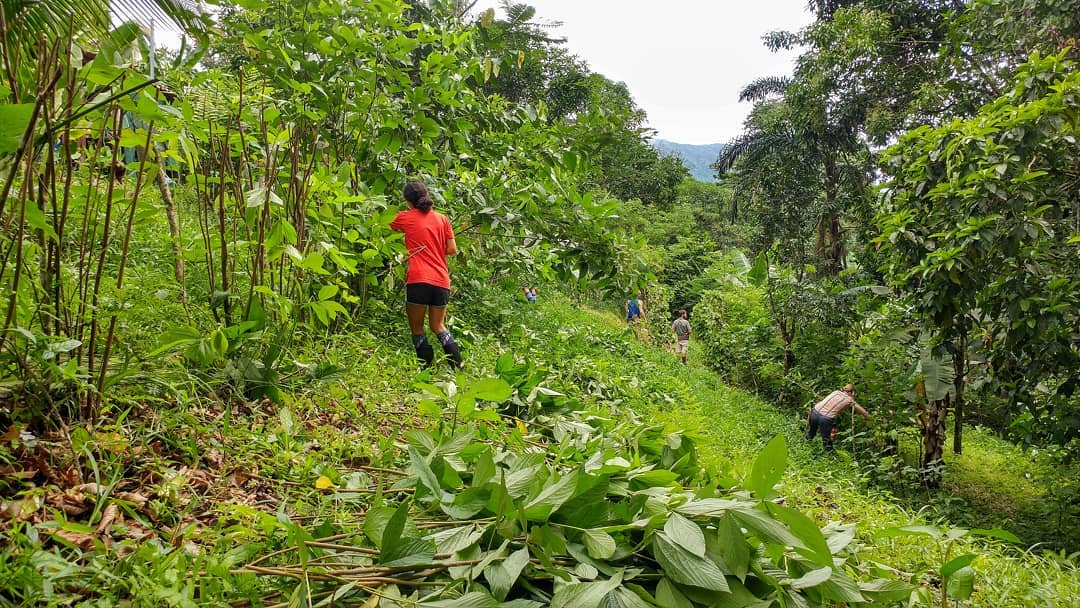 Agroforestry1.jpg