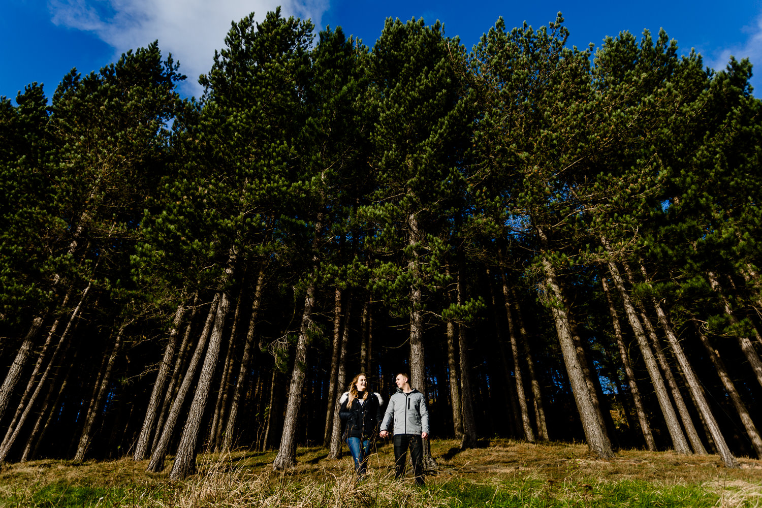 A wide shot of a couple stood in front of tall tree pine trees on their Dovestone reservoir pre wedding shoot.