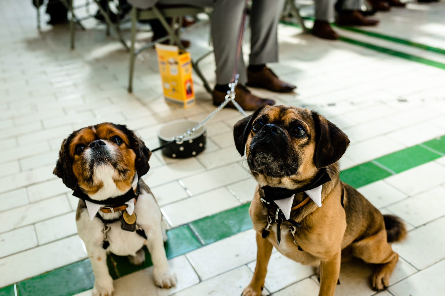Dogs at weddings, Victoria Baths wedding photographer.