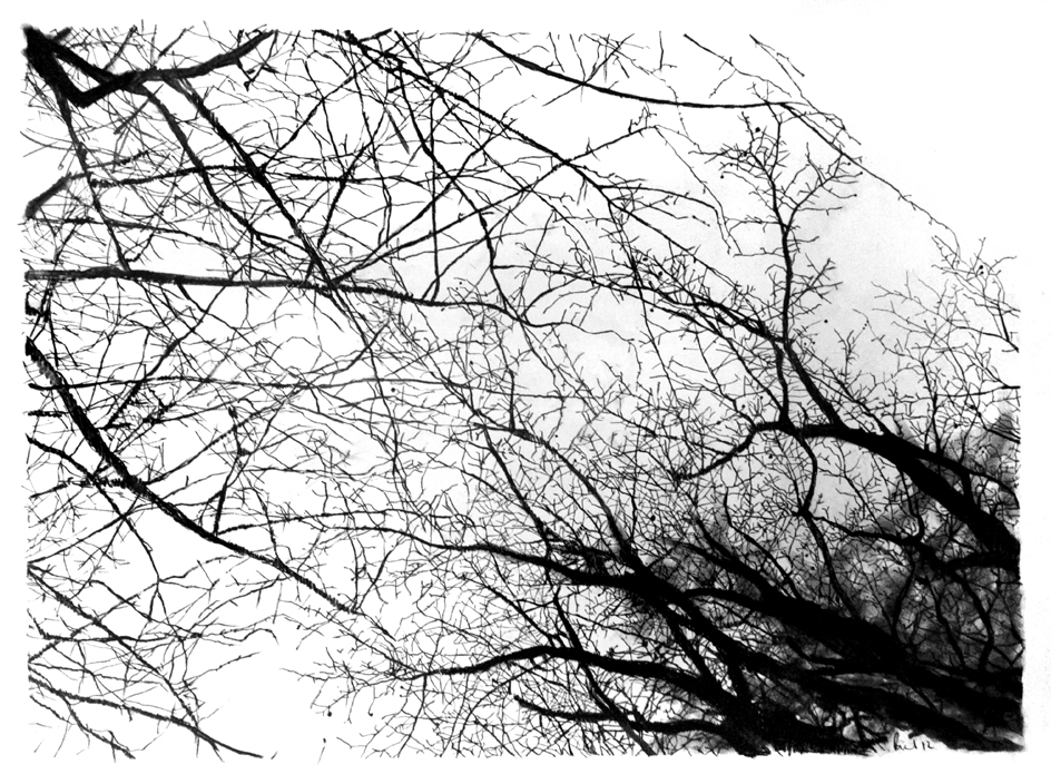 Branches (framed)  2011 | 84 x 59.4cm Charcoal Signed  SOLD