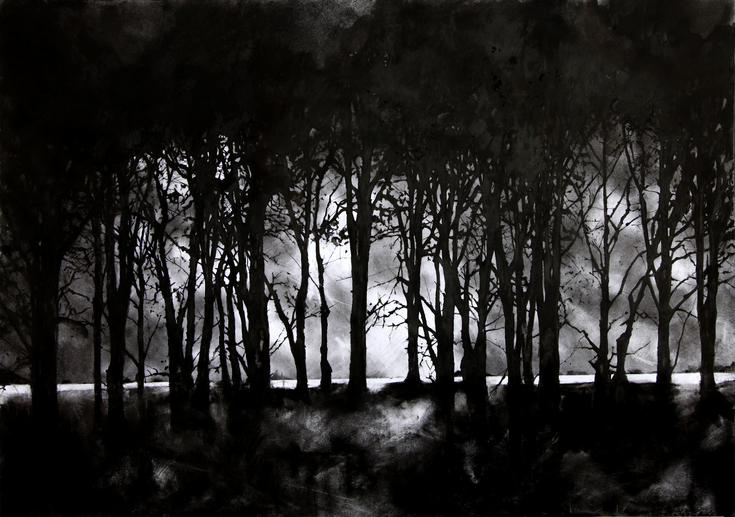 The Forest  2018 | 84 x 60cm Charcoal & compressed charcoal Signed on front  SOLD