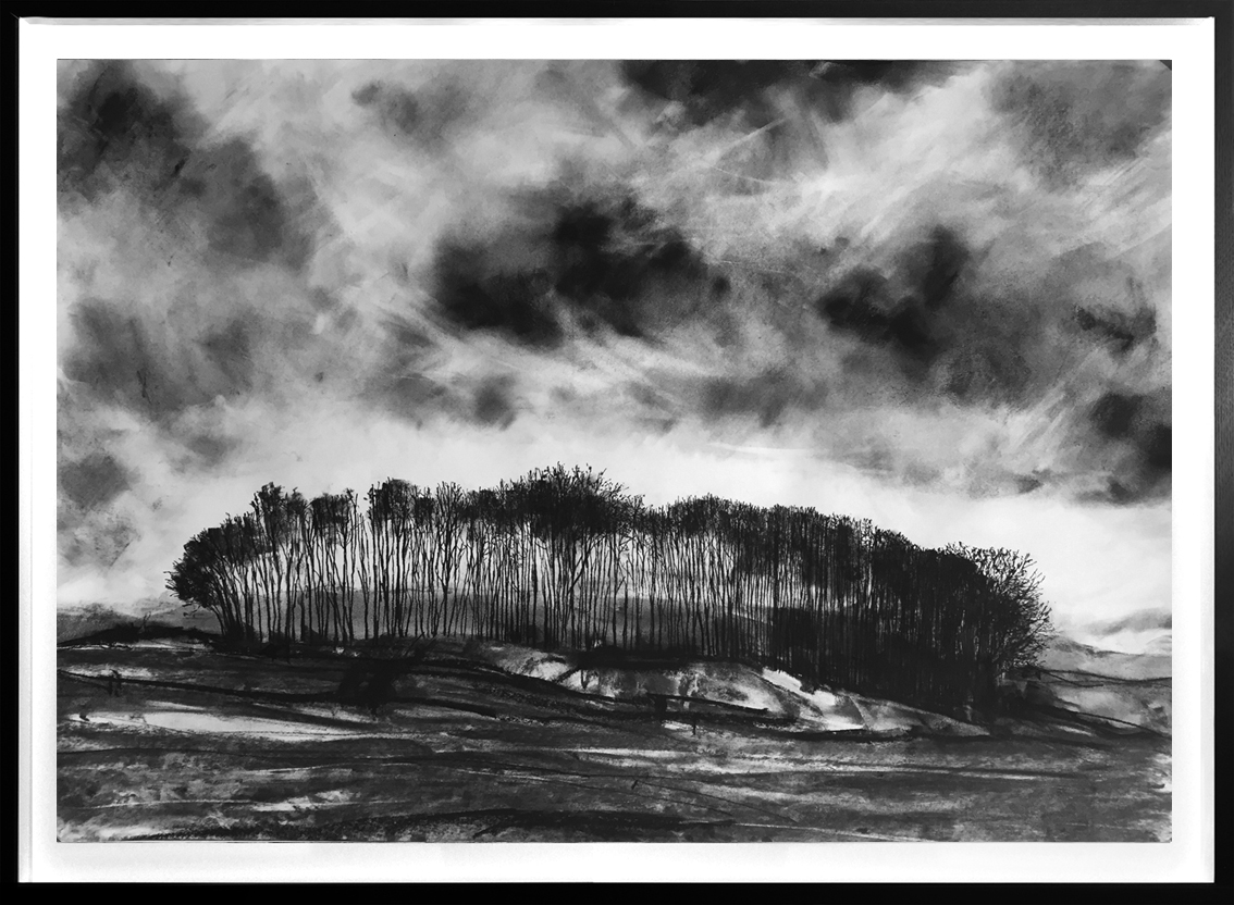 Hallgate Copse  2017 | 84 x 60cm Charcoal & compressed charcoal Signed on front   BUY PRINT