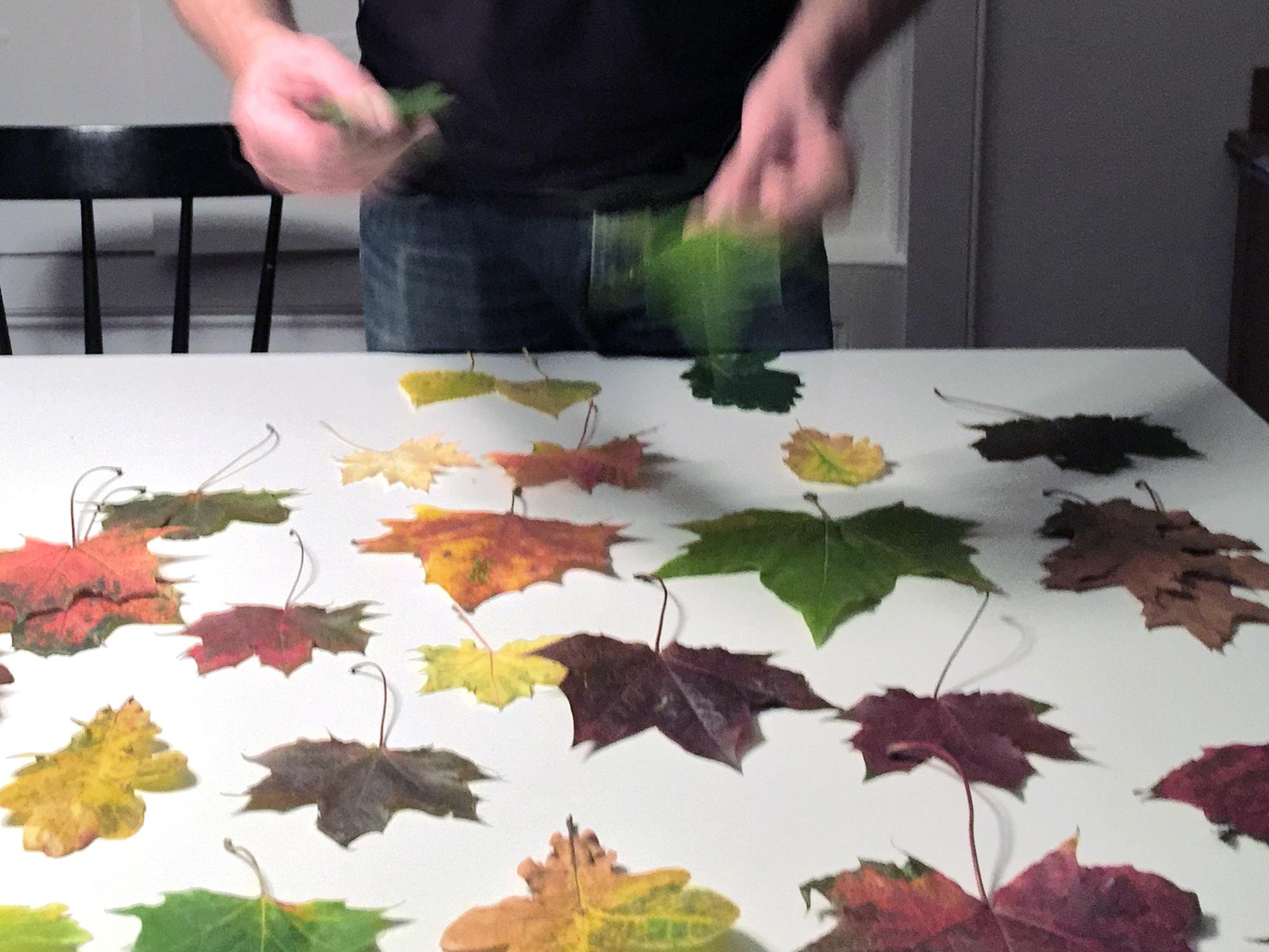 Picking the leaf