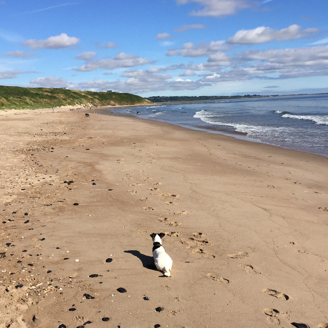 On Warkworth beach with Poppy my jumping Jack flash